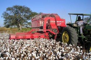 Abren inscripción para productores algodoneros