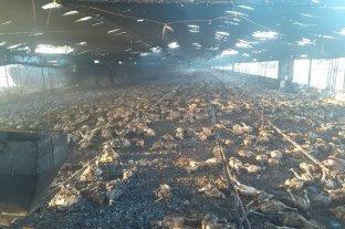 Se incendió una granja avícola en Colonia San José
