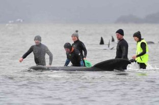 Han muerto un tercio de las 270 ballenas varadas en Australia