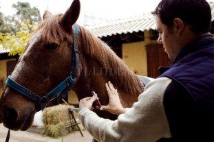 El 1 de octubre vence el plazo para reacreditarse en programas de sanidad animal