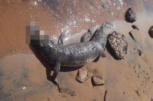 Denuncian un brutal caso de maltrato animal en la costa del Río Paraná