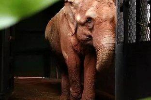 El Santuario en Brasil se prepara para la llegada de la elefanta Bambi