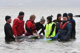 Rescataron a las últimas veinte ballenas varadas en Australia