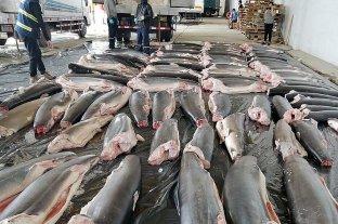 Incautaron en Perú 11 toneladas de tiburones mutilados