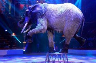 Francia prohibirá la presencia de animales salvajes en los circos