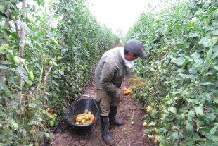 Aumento para los trabajadores rurales