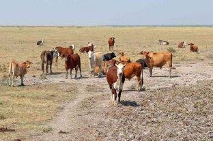 Corrientes: entregaron alimentos para ganado a pequeños productores afectados por la sequía