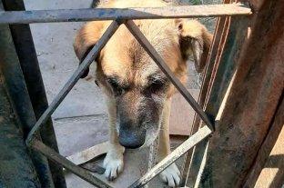Denuncian a una ladrona de perros en zona de Las Flores - Proteccionistas animales rescataron un perro que llevaba un año encerrado, en una casa deshabitada de calle La Pampa al 6100. -