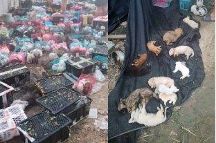 China: encuentran 4.000 perros, gatos y otros animales muertos dentro de cajas en un depósito