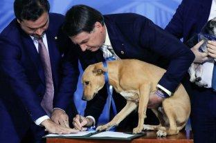 """El perro de Jair Bolsonaro """"firmó"""" una ley contra el maltrato animal"""