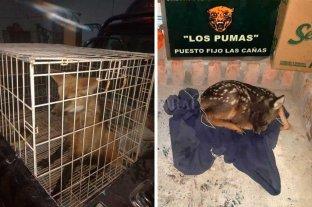 Rescataron un aguará guazú en San Justo y un guazuncho en Helvecia