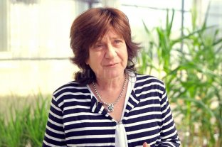 La investigadora Raquel Chan se mostró sorprendida por el rechazo de entidades del campo al trigo transgénico