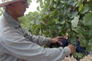 Mendoza: se necesitan más de 10 mil trabajadores para la cosecha 2021