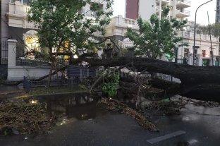 Del calor a la tormenta: árboles y postes caídos por toda la ciudad