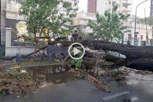 Del calor a la tormenta: árboles y postes caídos por toda la ciudad -