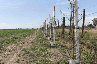"""""""Corredores biológicos"""" para proteger la flora y fauna de San Carlos Norte"""