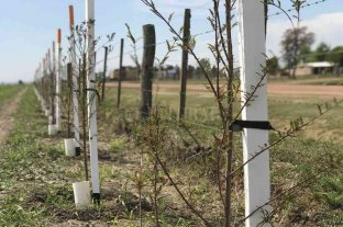 """Lanzan el proyecto regional de """"Corredores Biológicos"""" en San Carlos Norte"""