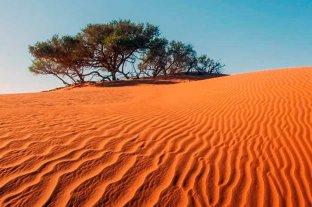Sorprendente: encuentran cientos de millones de árboles en el desierto del Sahara