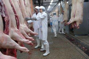 Las exportaciones de productos y subproductos porcinos crecieron 63%