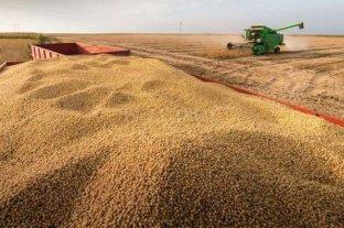 La soja cayó $ 950 hasta los $ 25.050 la tonelada
