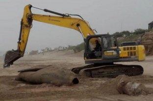 Miramar: dieron sepultura a una ballena franca austral que apareció muerta en la playa
