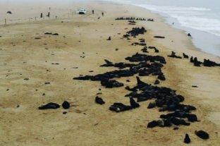 Encuentran más de 7.000 focas muertas en una playa de Namibia