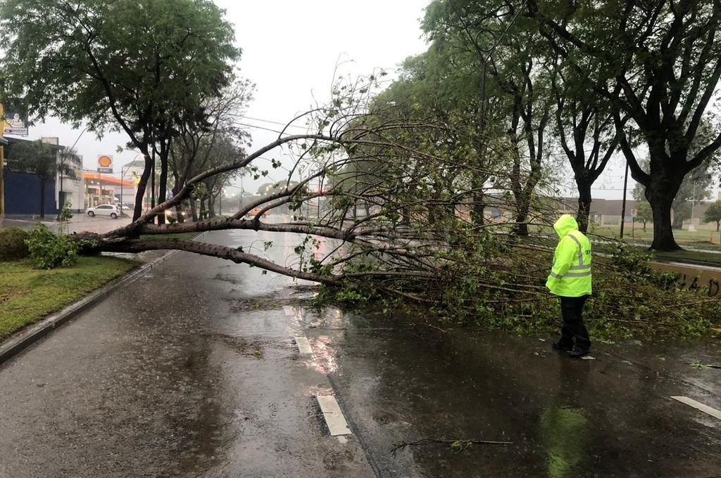 Lluvia: Registro de más de 36 mm y árboles caídos en la ciudad de Santa Fe  - Árbol caído en Avenida Alem y Belgrano. -