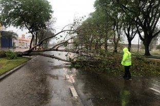 Lluvia: Registro de más de 36 mm y árboles caídos en la ciudad de Santa Fe