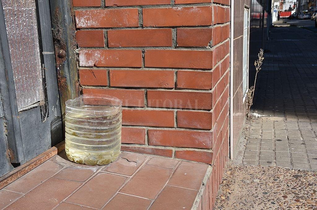 Si se deja agua para las mascotas, habrá que tomar la precaución de renovarla con frecuencia y limpiar el recipiente. Crédito: Flavio Raina