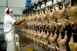 Crece la producción y el consumo de carne aviar
