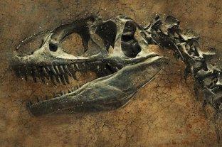 Brasil: descubren parásitos fosilizados en esqueletos de un dinosaurios