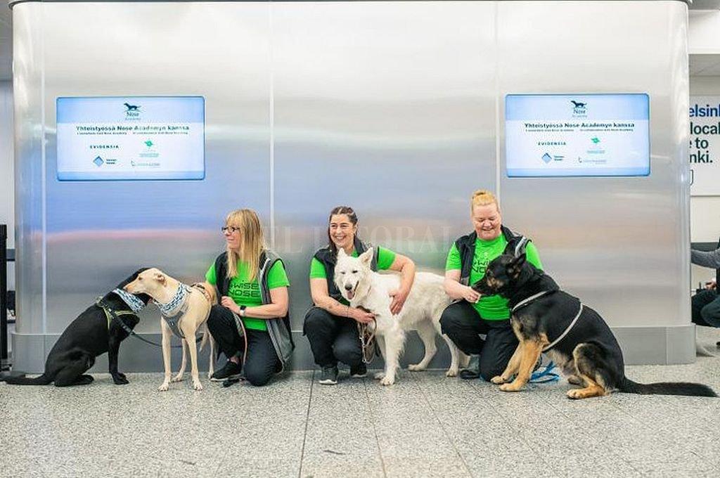 Perros utilizados en el aeropuerto de Helsinki. Crédito: Captura digital