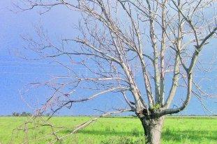Seguirán escaseando las lluvias en la mayor parte del área agrícola nacional