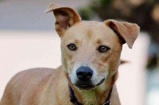 Un estudio científico reveló que los perros existen desde hace 11.000 años