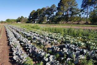 Agroecología: la práctica sana para cosechar verduras