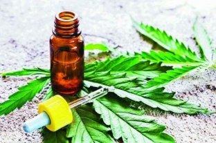 Reglamentaron el autocultivo de cannabis medicinal y la venta en farmacias de sus aceites