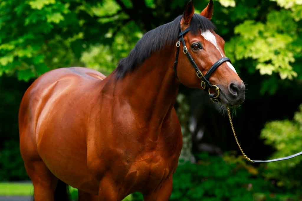 Crédito: Coolmore Stallions.