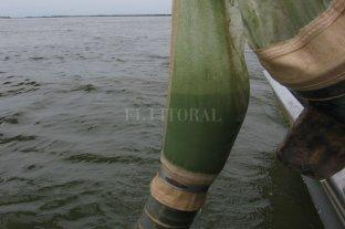 Las aguas verdes en lagunas y ríos  santafesinos pueden ser tóxicas