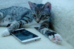 """""""MeowTalk"""", la aplicación que puede traducir los maullidos de los gatos"""