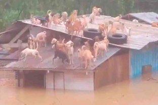 Filipinas: conmovedor rescate de perros que quedaron atrapados en el techo de un refugio tras una inundación -  -