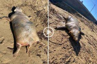 Video: la extraña criatura que apareció en una playa después de una tormenta