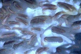 Descongelaron gusanos prehistóricos y revivieron: comenzaron a comer y a moverse -
