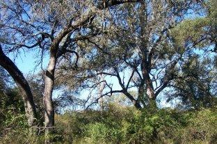 Agrónomos en alerta por un proyecto oficial para modificar la Ley de Bosques