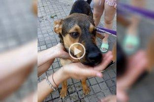 Video: se mudaron y dejaron al perro abandonado en la terraza -  -