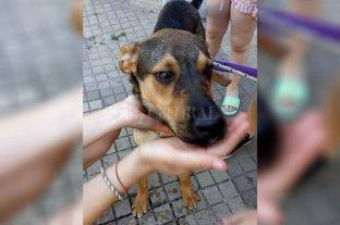 Video: se mudaron y dejaron al perro abandonado en la terraza