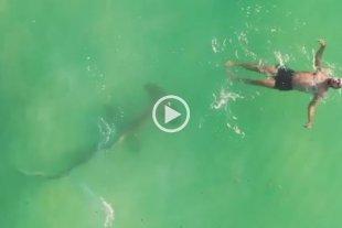"""Video: un tiburón martillo acechó a un hombre que estaba haciendo """"la plancha"""" en Miami"""
