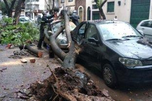 Árboles caídos y daños por la tormenta en el sur provincial