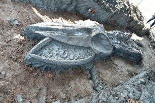 Hallaron en Tailandia el esqueleto casi intacto de una gigantesca ballena prehistórica