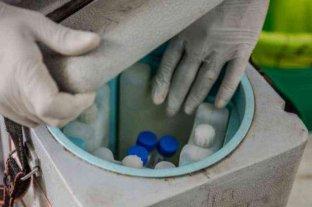 Córdoba analiza almacenar las vacunas en cámaras de frío de una reconocida marca de helados