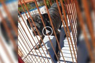 Video: rescataron a un perro que cayó a un silo